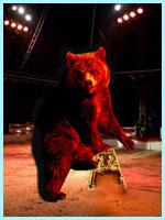 L'ours au Cirque