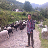 With goats
